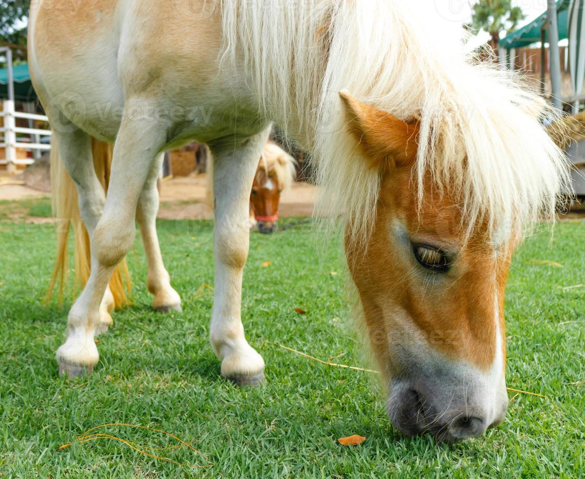 cheval mange photo