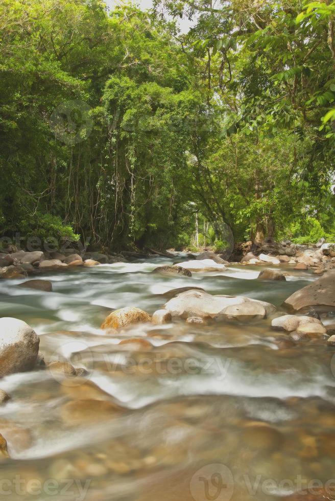 jungle rivière-costa rica photo