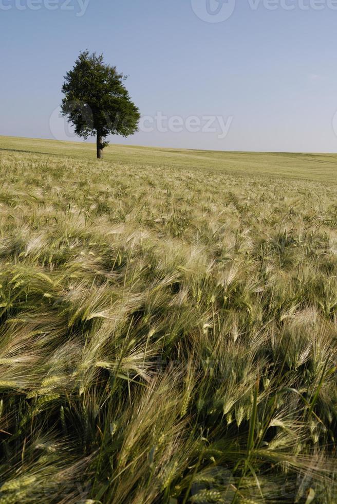 paysage d'été photo