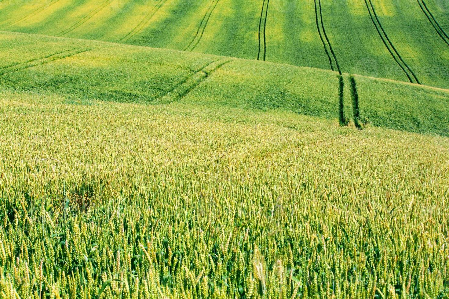 champ d'été photo