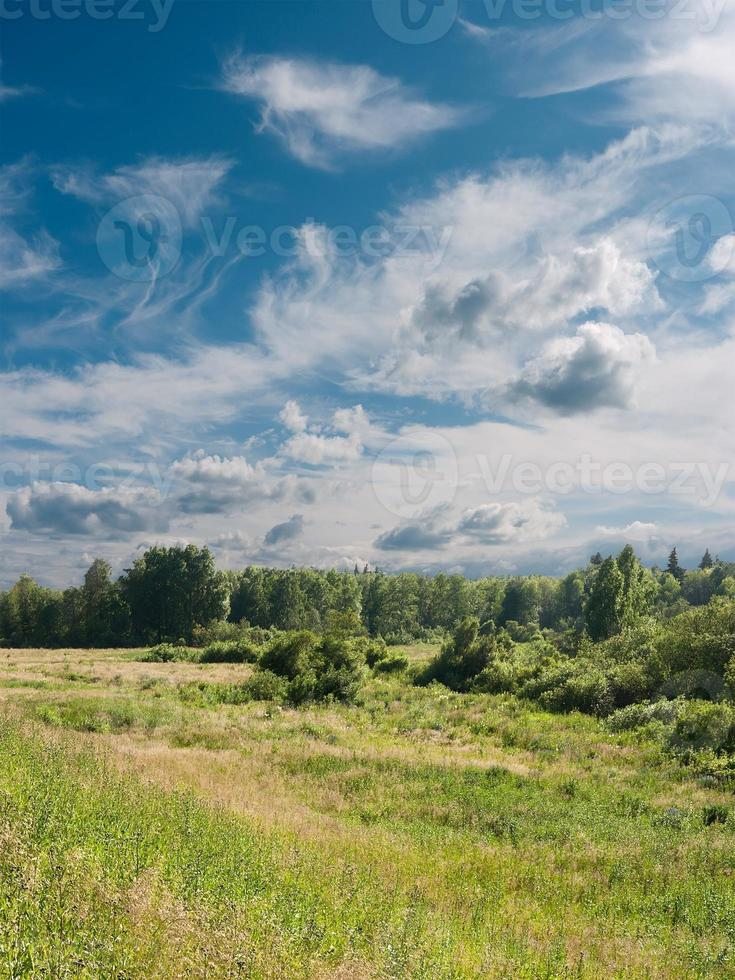 paysage d'été. photo