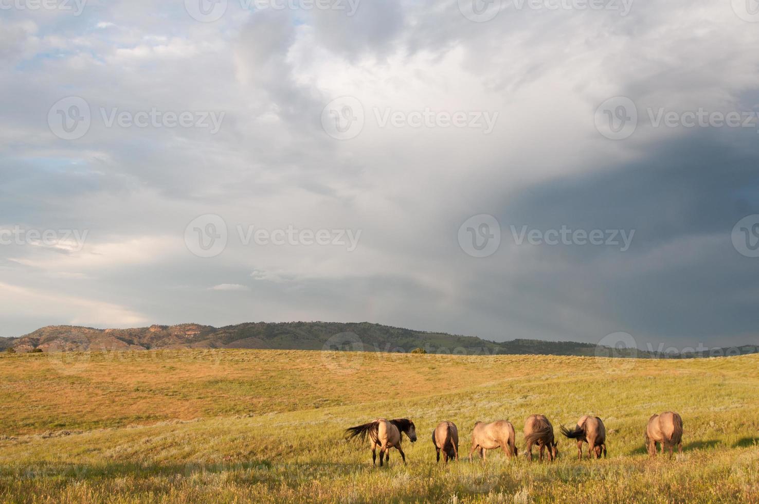 tomber au sanctuaire de chevaux sauvages des collines noires photo