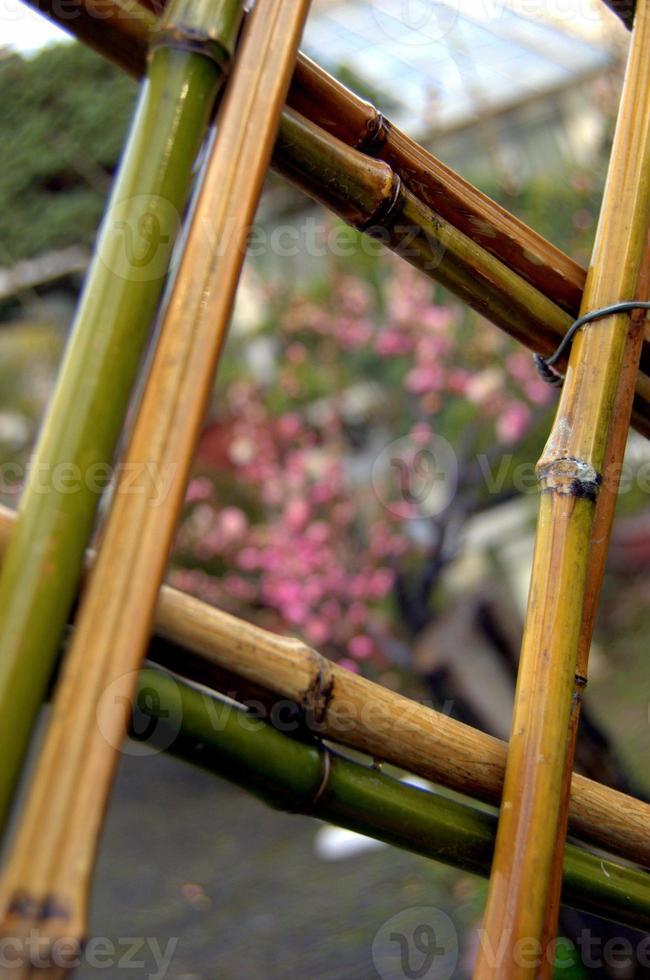 clôture en bambou à suzhou, chine photo