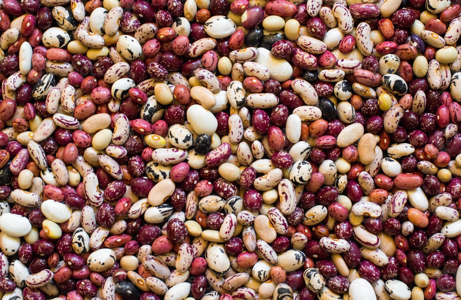 haricots de différentes couleurs et espèces photo