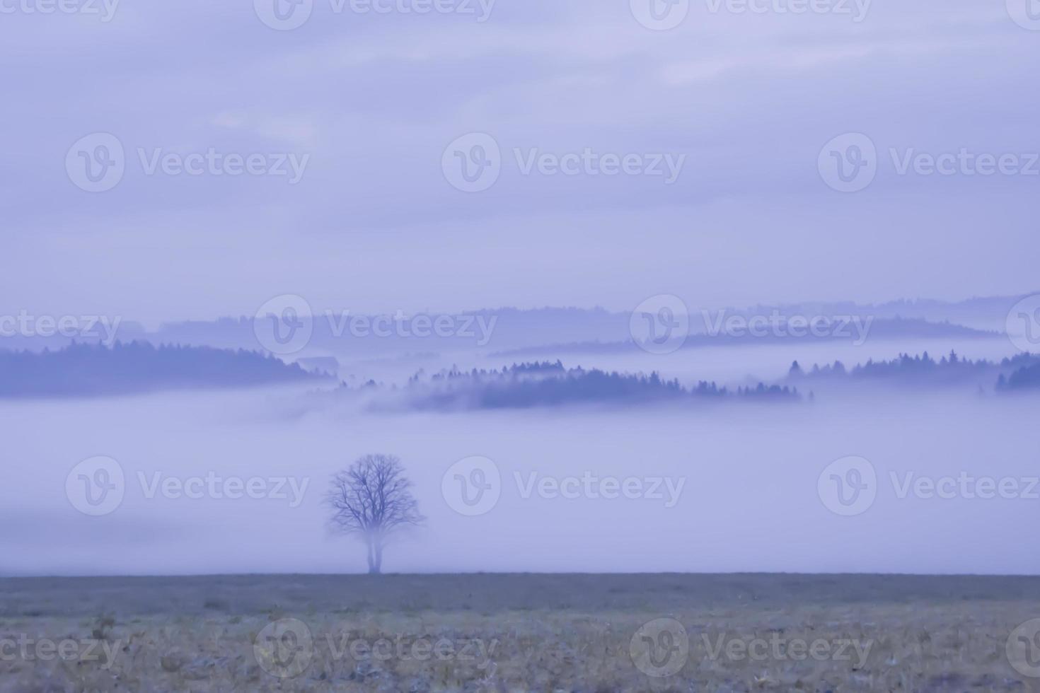 paysage dans le brouillard photo