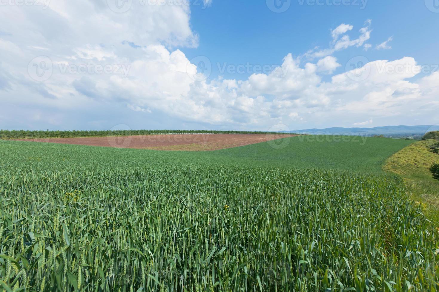 paysage agricole photo