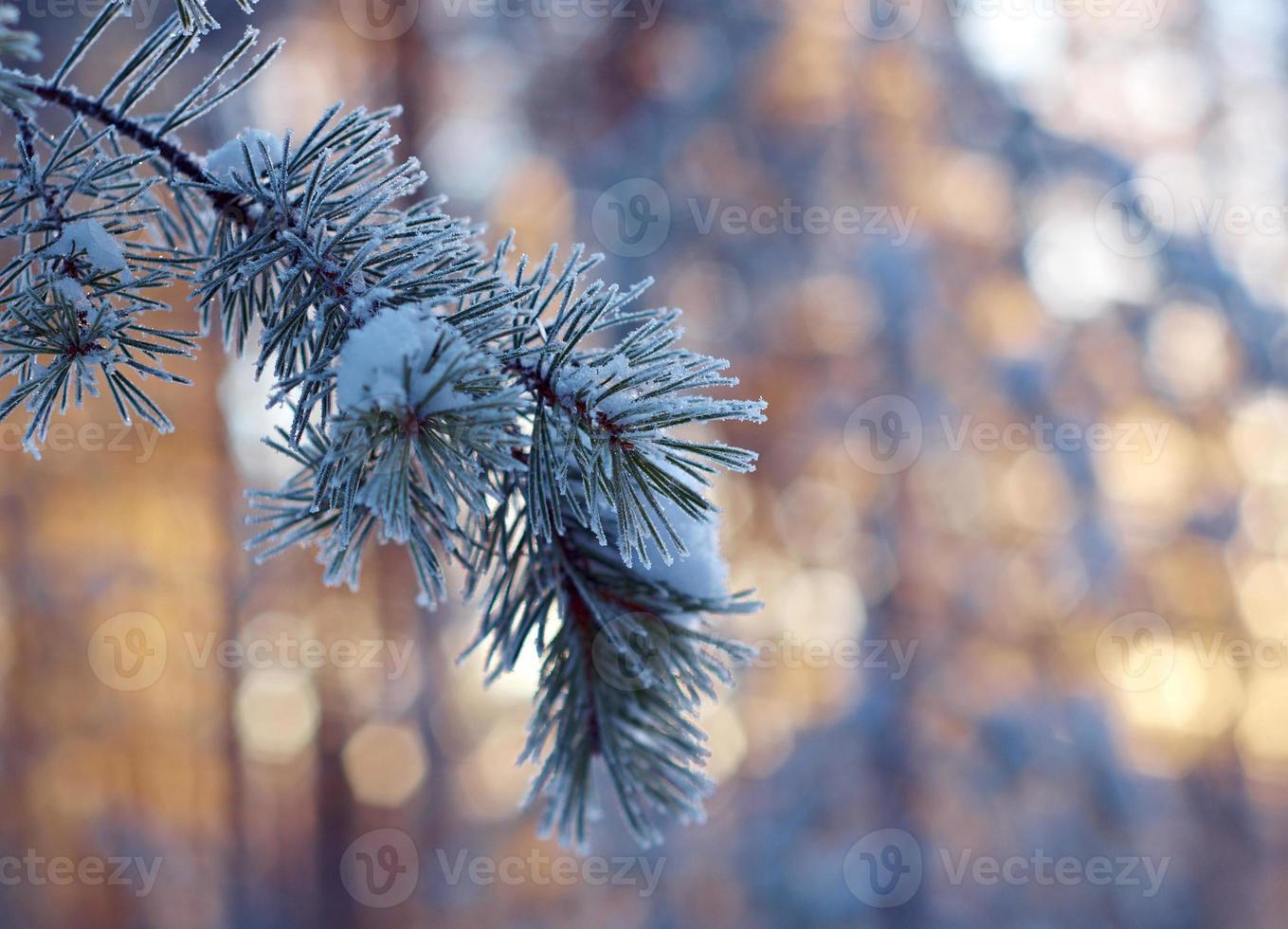 paysage d'hiver. scène d'hiver photo