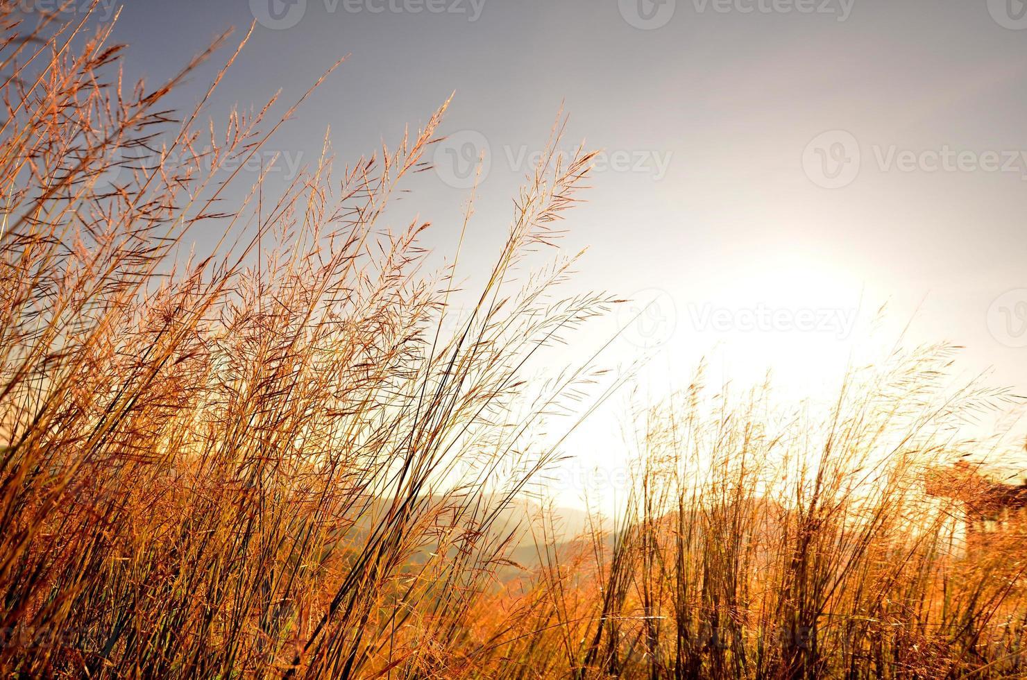 champs d'herbe sur le paysage de montagne photo