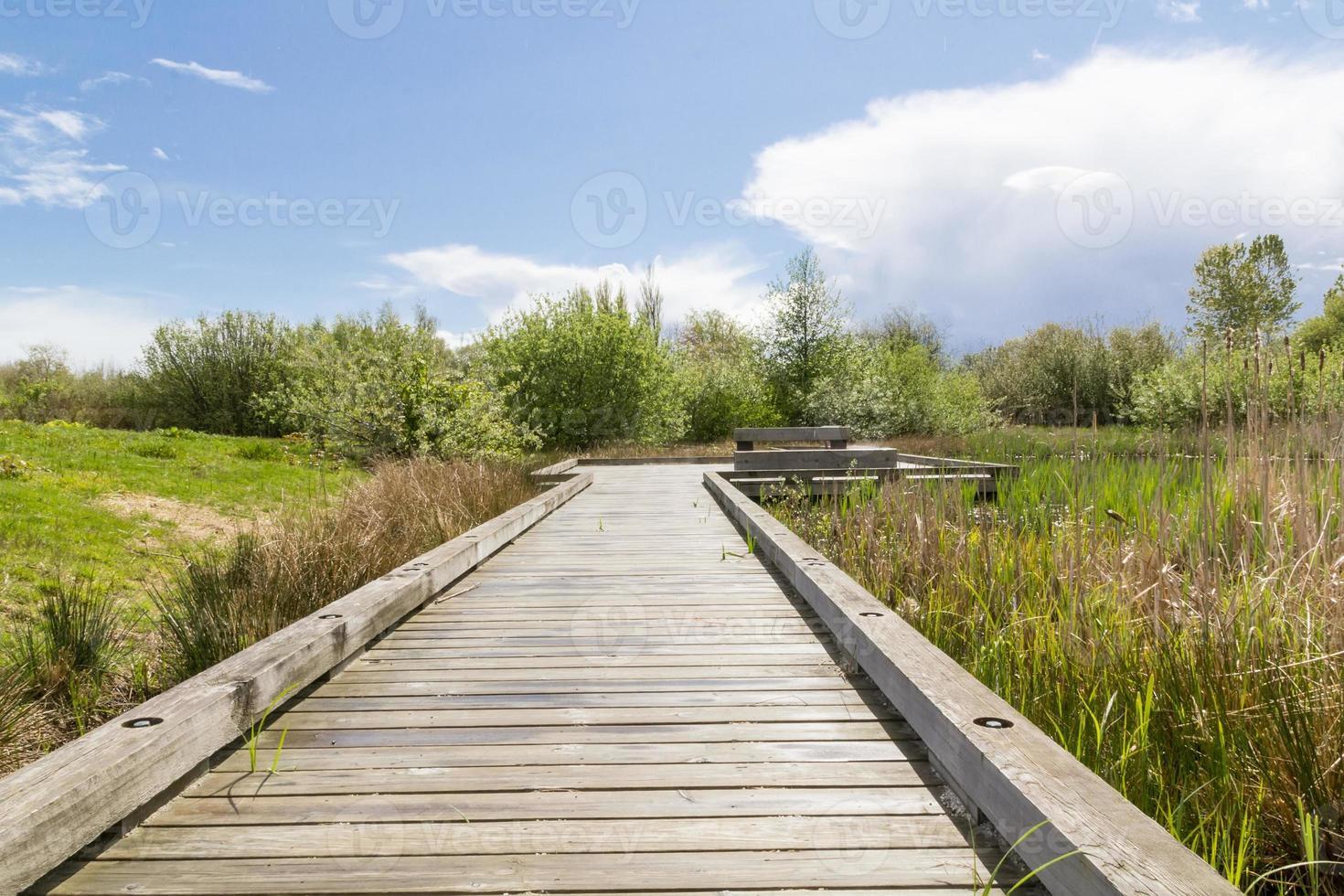 chemin du lac. photo