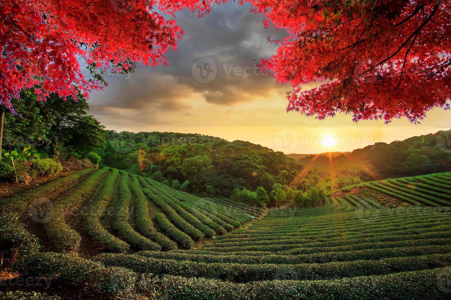 image de beau paysage, taiwan photo