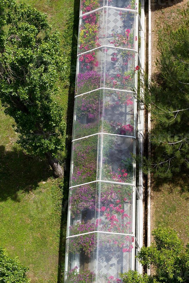 grande serre avec de nombreuses plantes et fleurs photo
