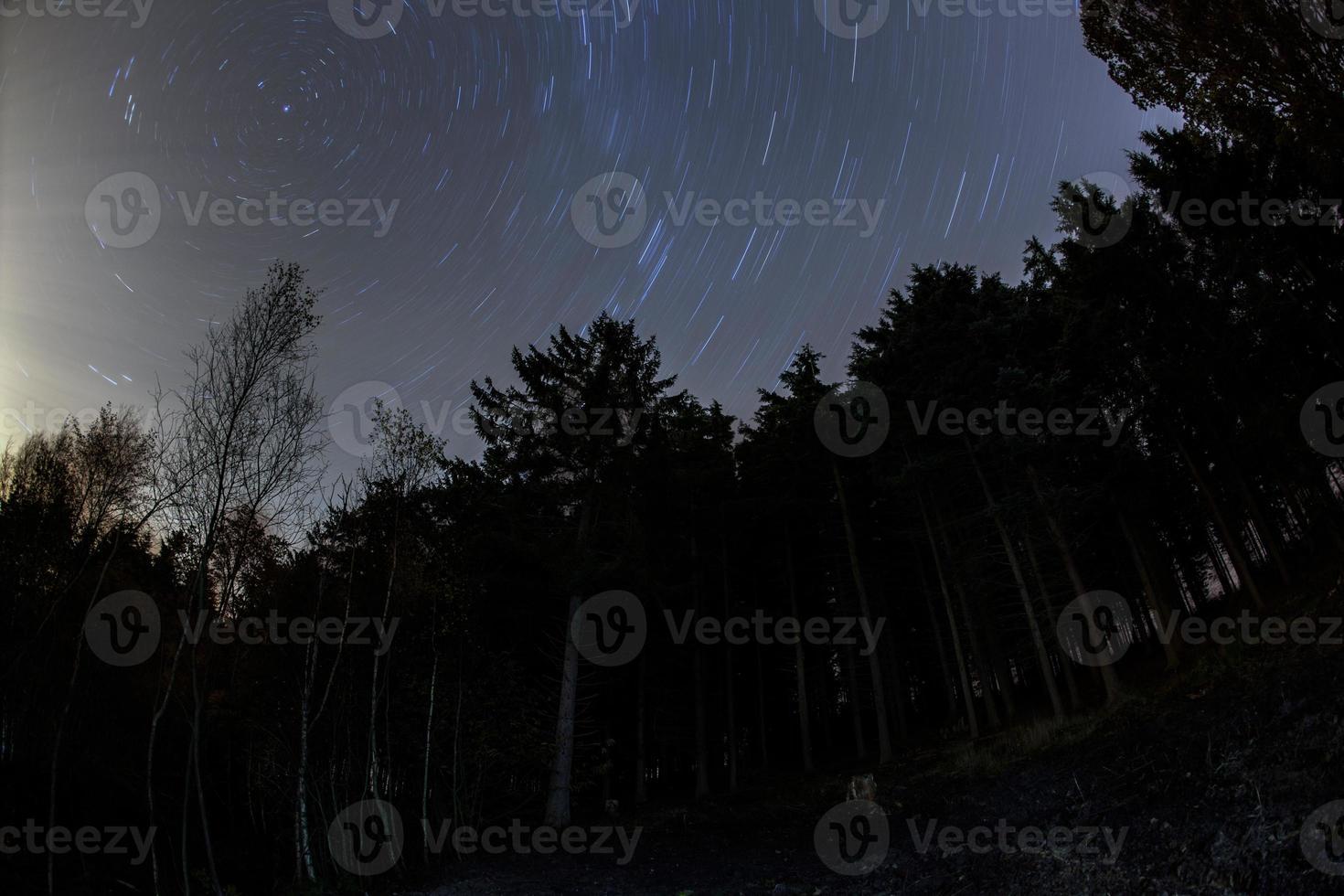 étoiles dans la forêt photo