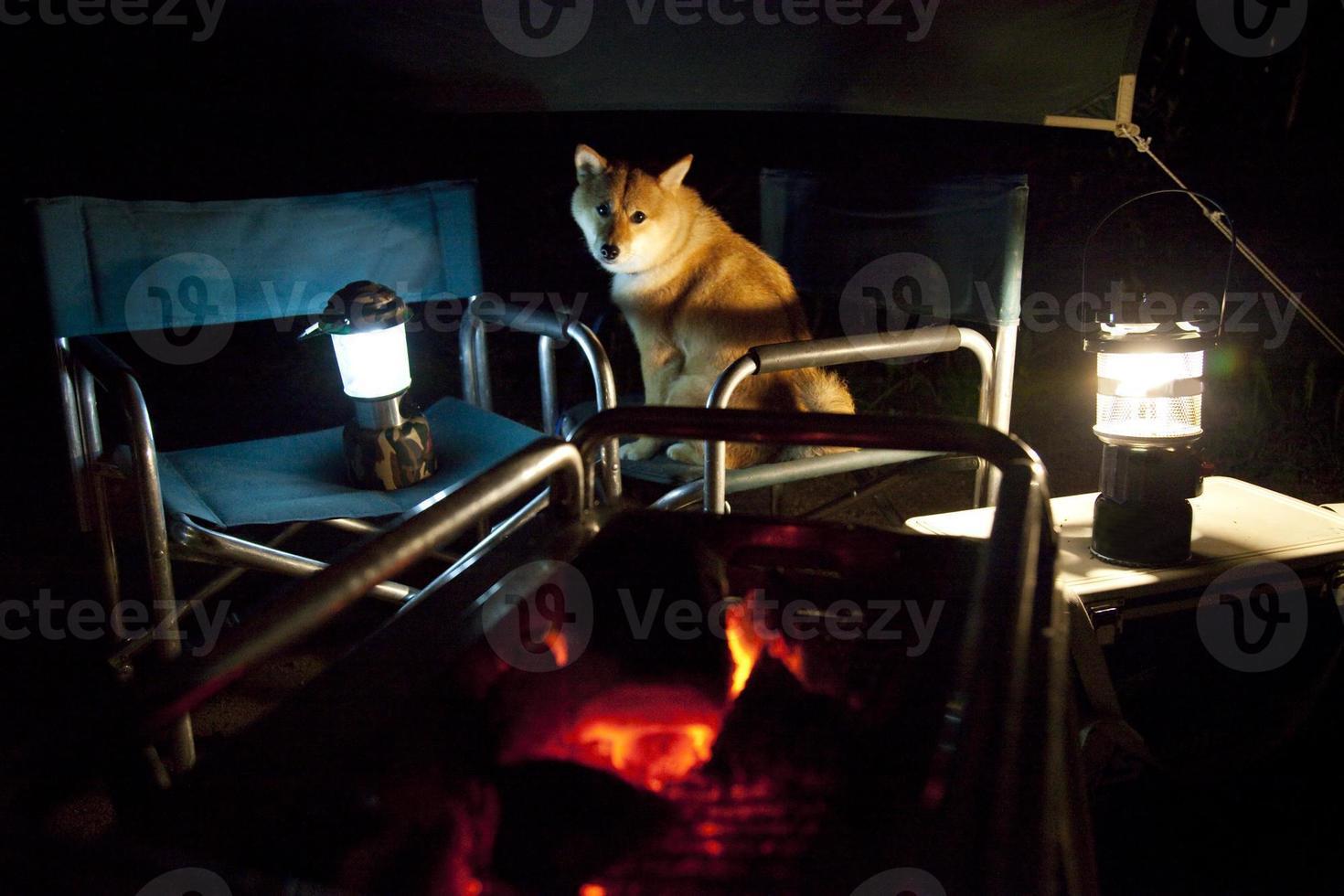 chien traditionnel japonais (chien shiba inu) photo