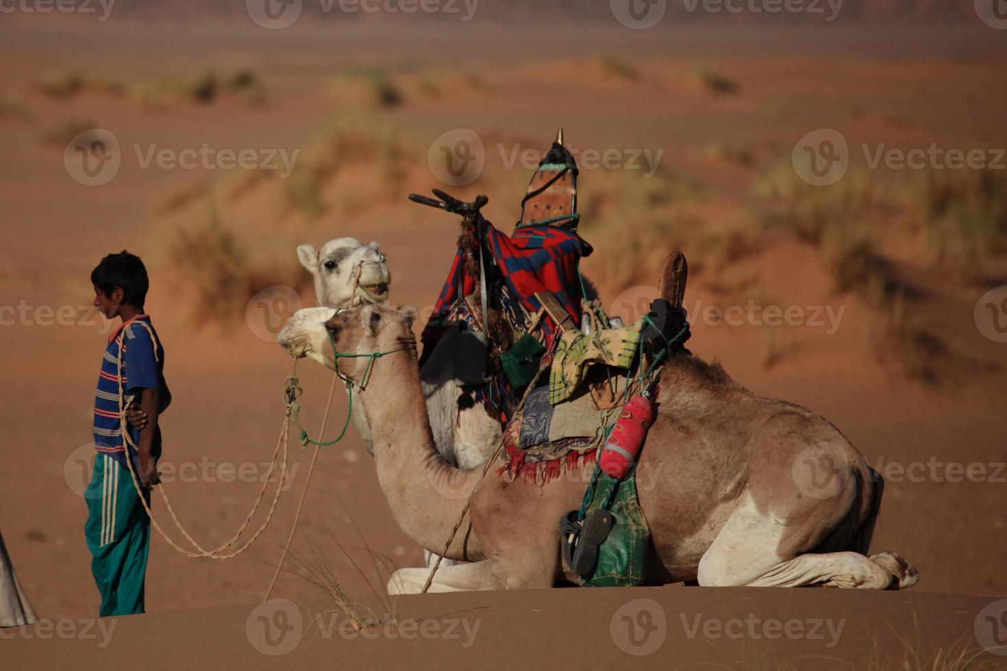 karawane in der sahara photo