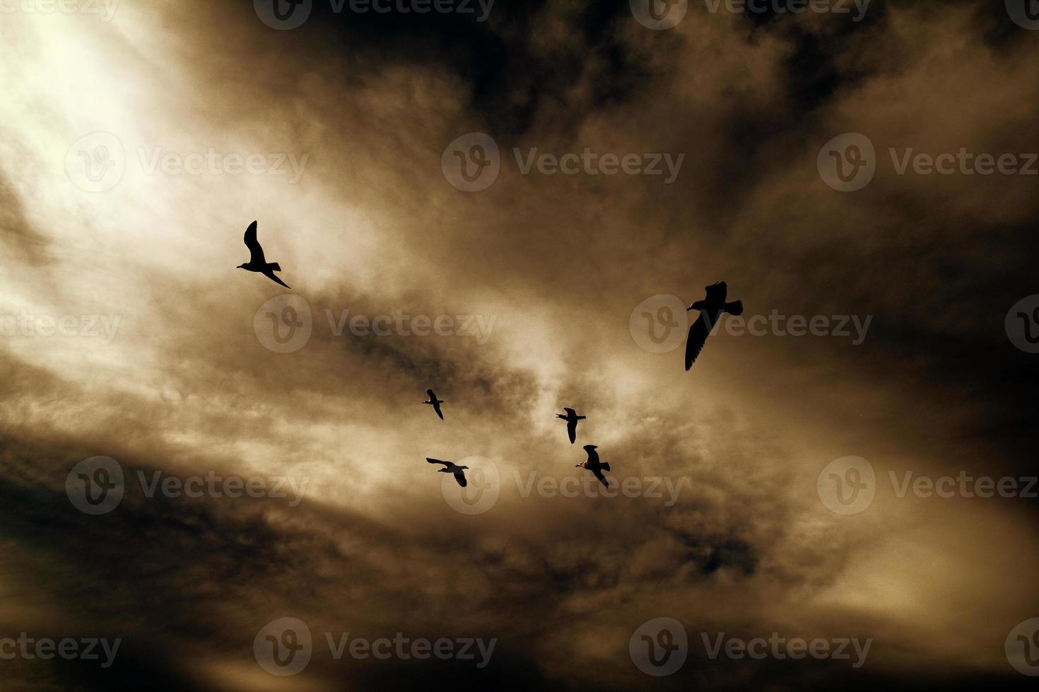 des oiseaux photo