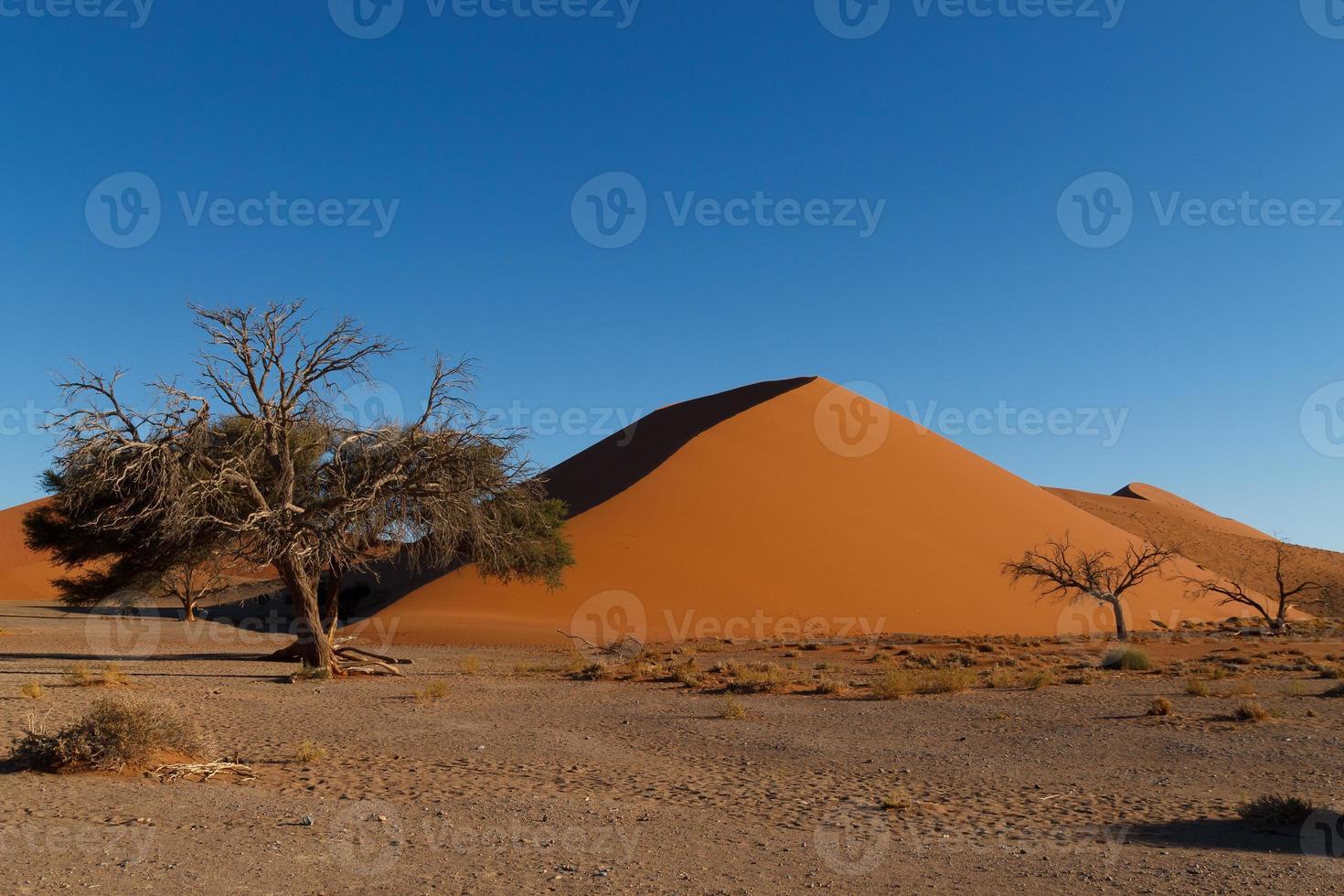 dune 45 photo