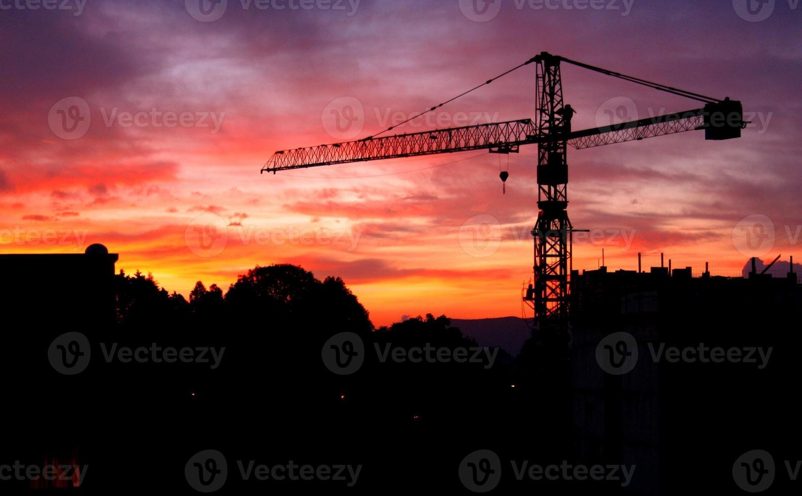 grue au coucher du soleil photo