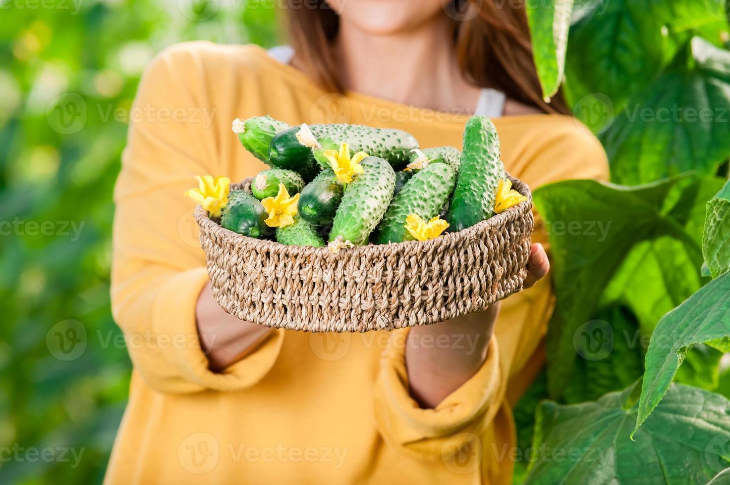 jeune femme tenant un panier plein de concombres frais photo