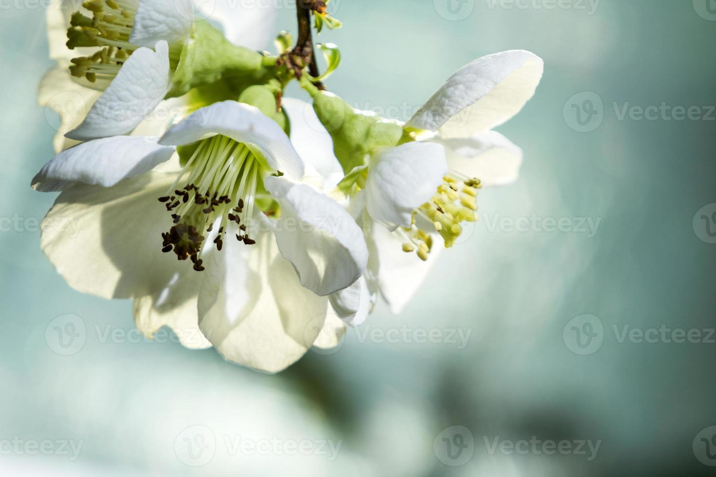 gros plan de fleurs. photo