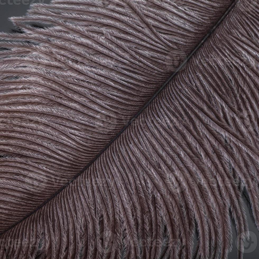 gros plan de plumes brunes photo