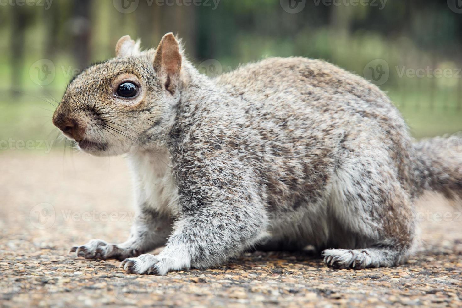 écureuil mignon photo
