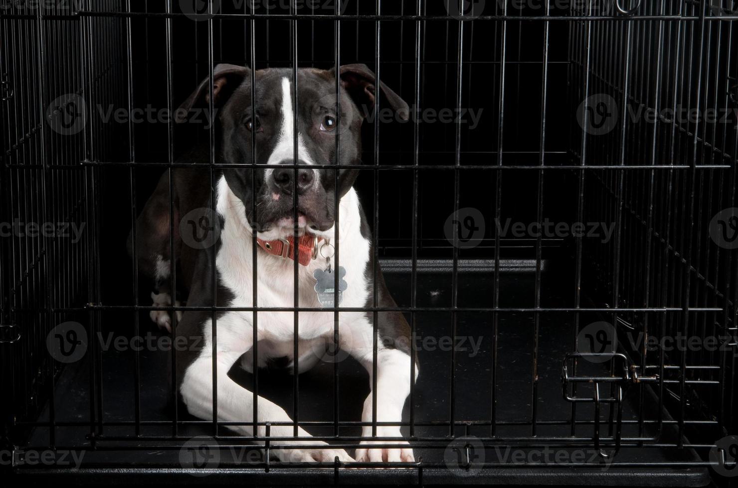 chien en cage photo