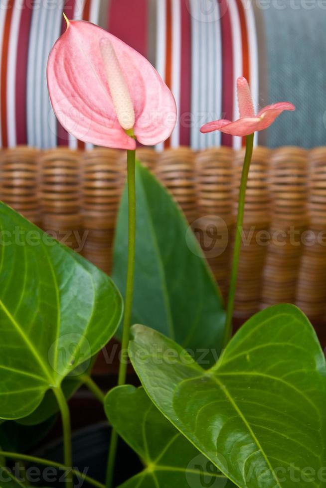 fleur de flamant rose photo