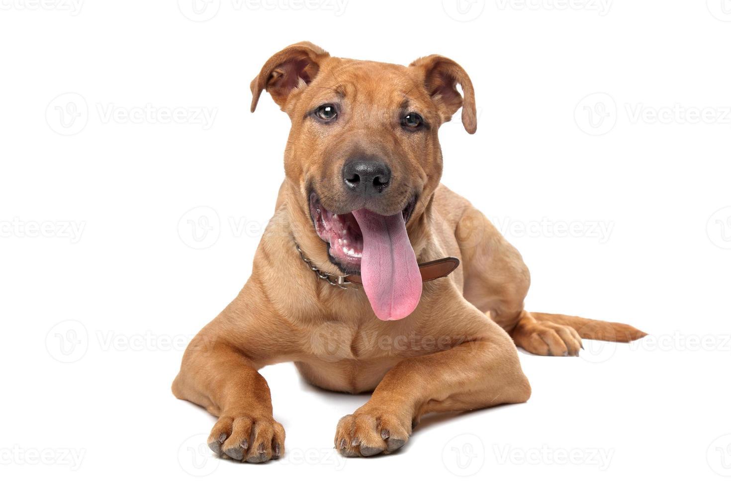 chien de race mixte photo