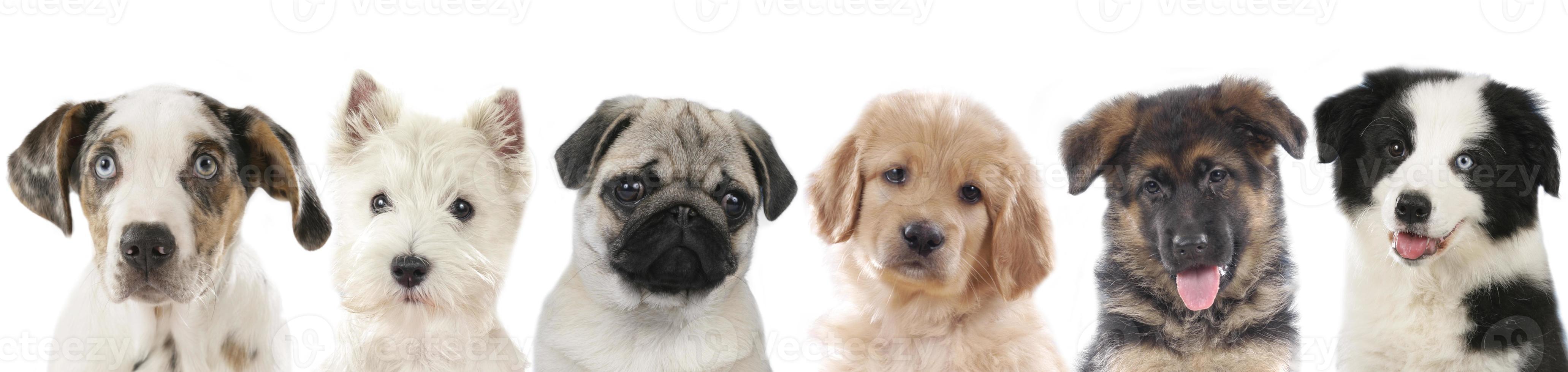 rangée de différents chiots, chiens photo