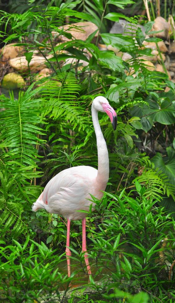 grand flamant rose photo