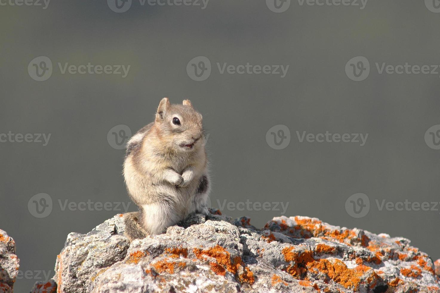 tamia sur le rocher photo