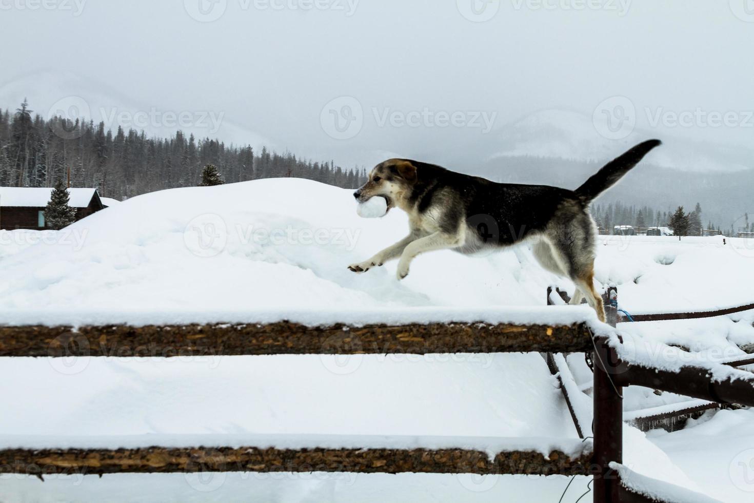 chien photo