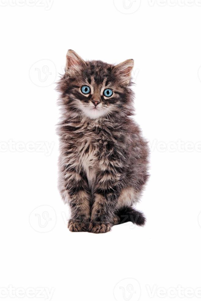 adorable chat tigré moelleux photo