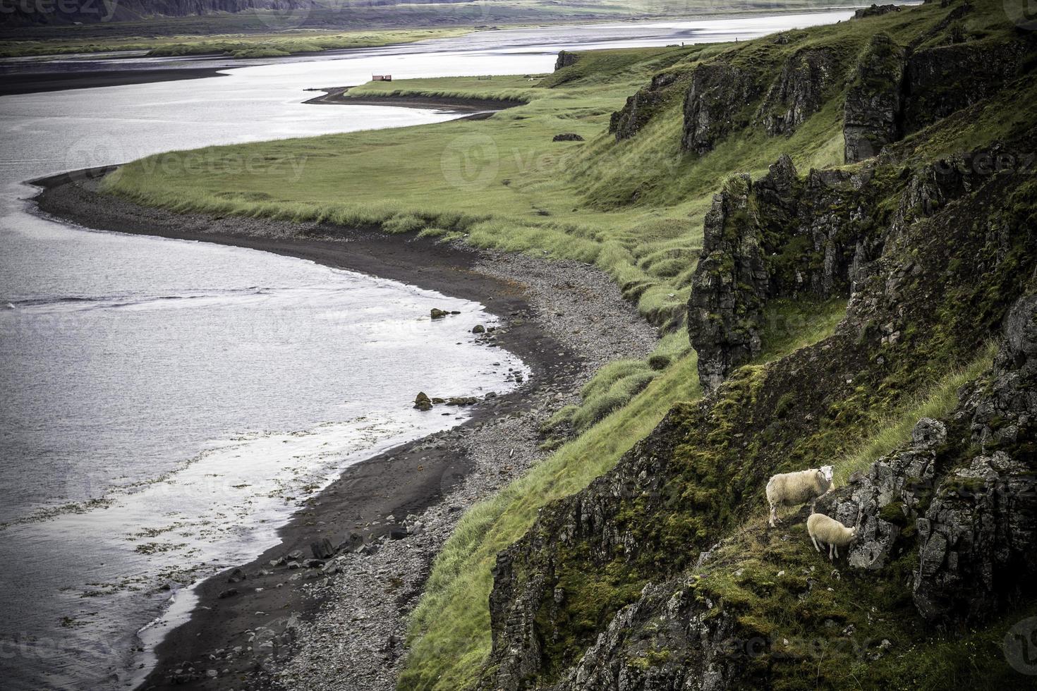 pâturage des moutons photo