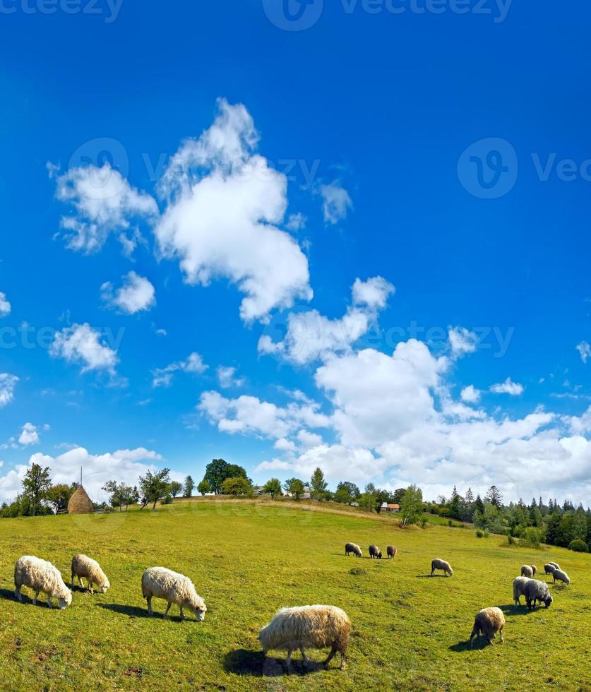troupeau de moutons au sommet d'une colline de montagne d'été photo
