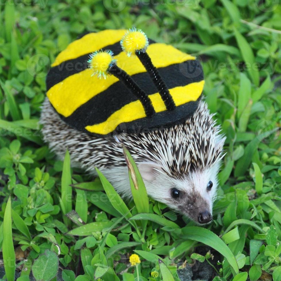 abeille hérisson photo