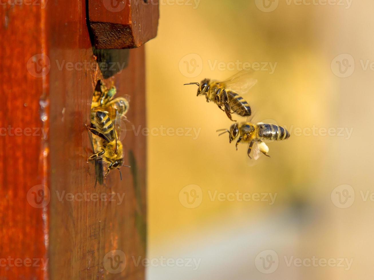 entrée de la colonie d'abeilles photo