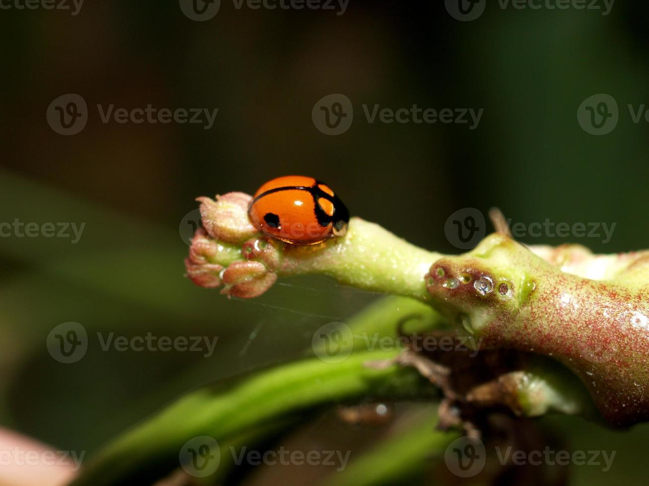 insecte insecte photo