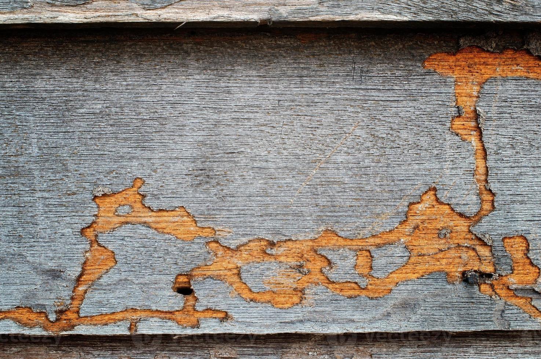 piste de termite sur mur en bois. photo