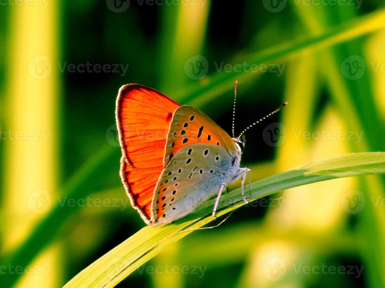 insecte steepe photo