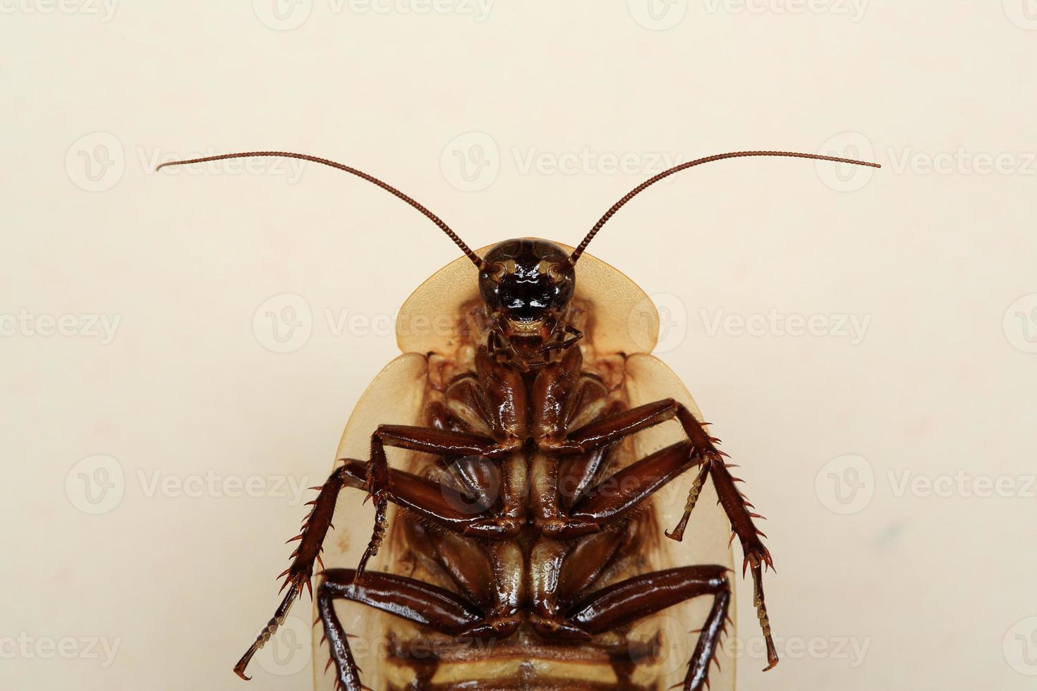 insecte blatte tête de mort drôle photo