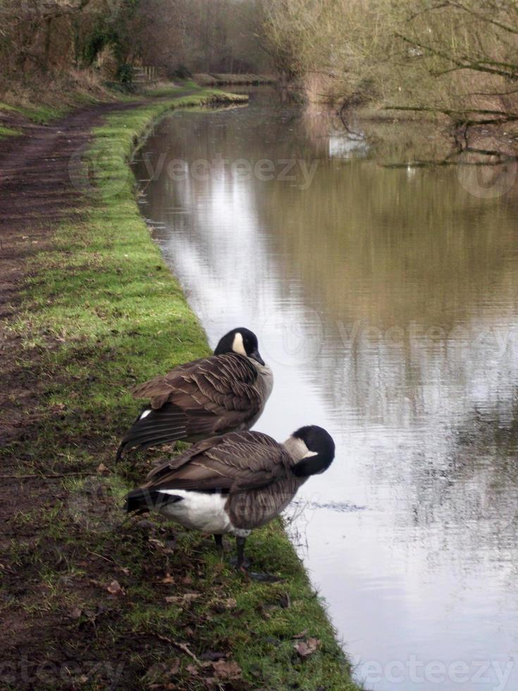 oiseaux lavés photo