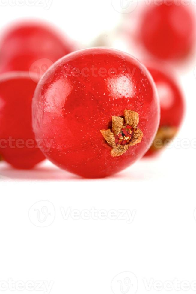 groseilles rouges photo