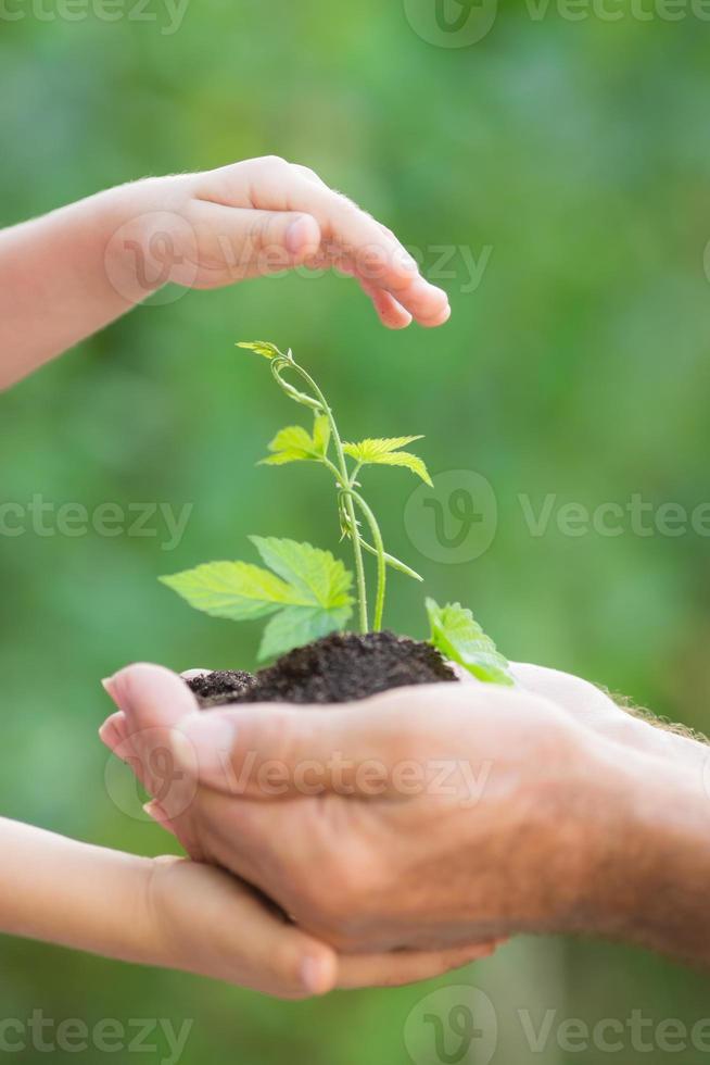 jeune plante en mains sur fond vert photo
