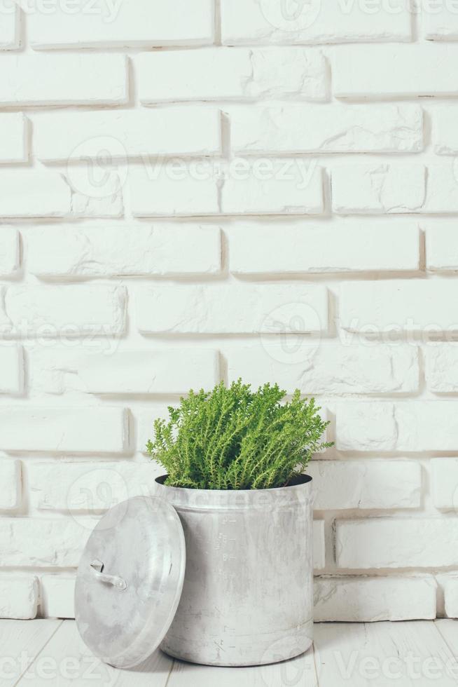 plante domestique photo