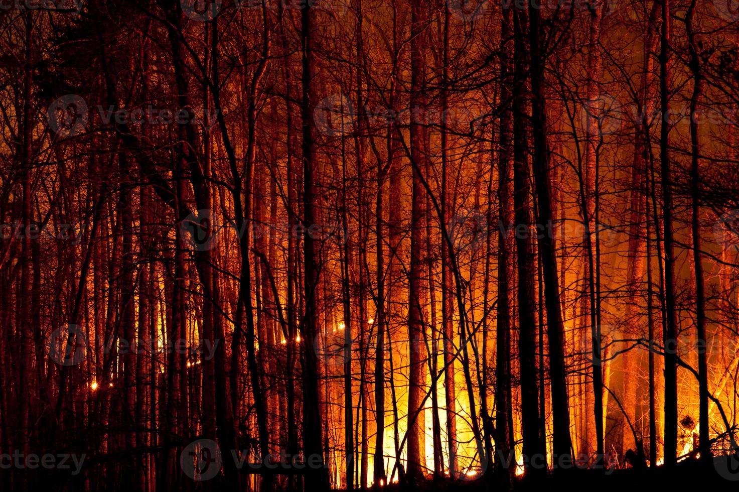 feu de forêt à combustion lente la nuit. photo