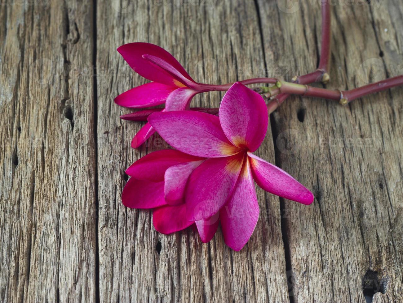 Fleur de frangipanier rouge sur table en bois spa photo