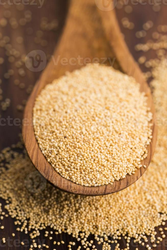 graines de pavot blanc photo