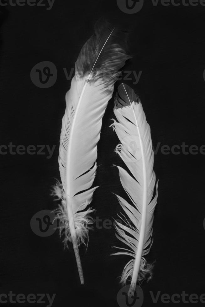 plumes indiennes amérindiennes en noir et blanc photo