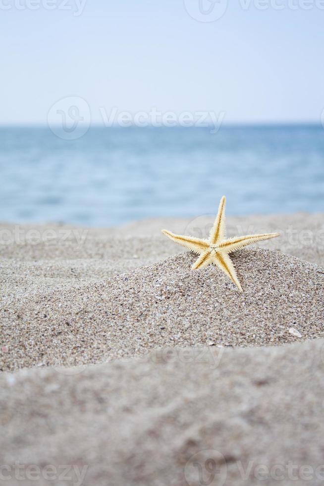 coquillages au bord de la mer photo